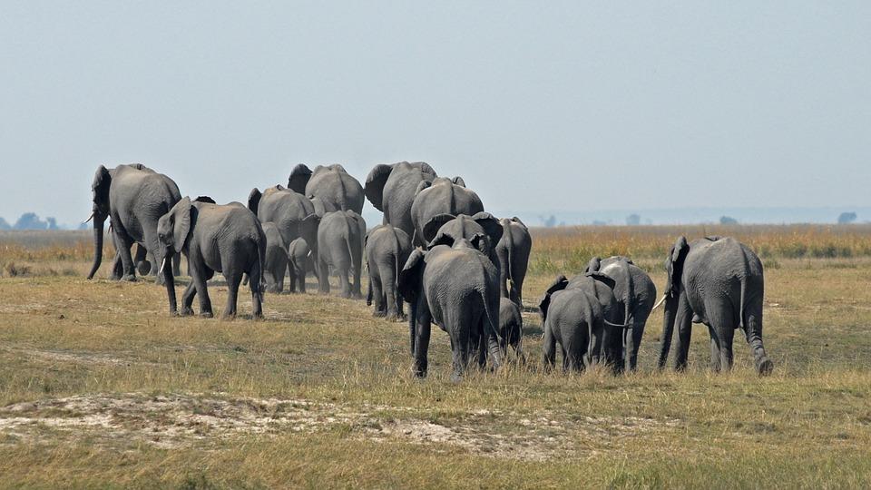 Safari au Botswana: les sites naturels à inclure dans votre itinéraire
