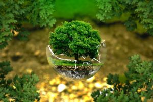 Les avantages de la reforestation