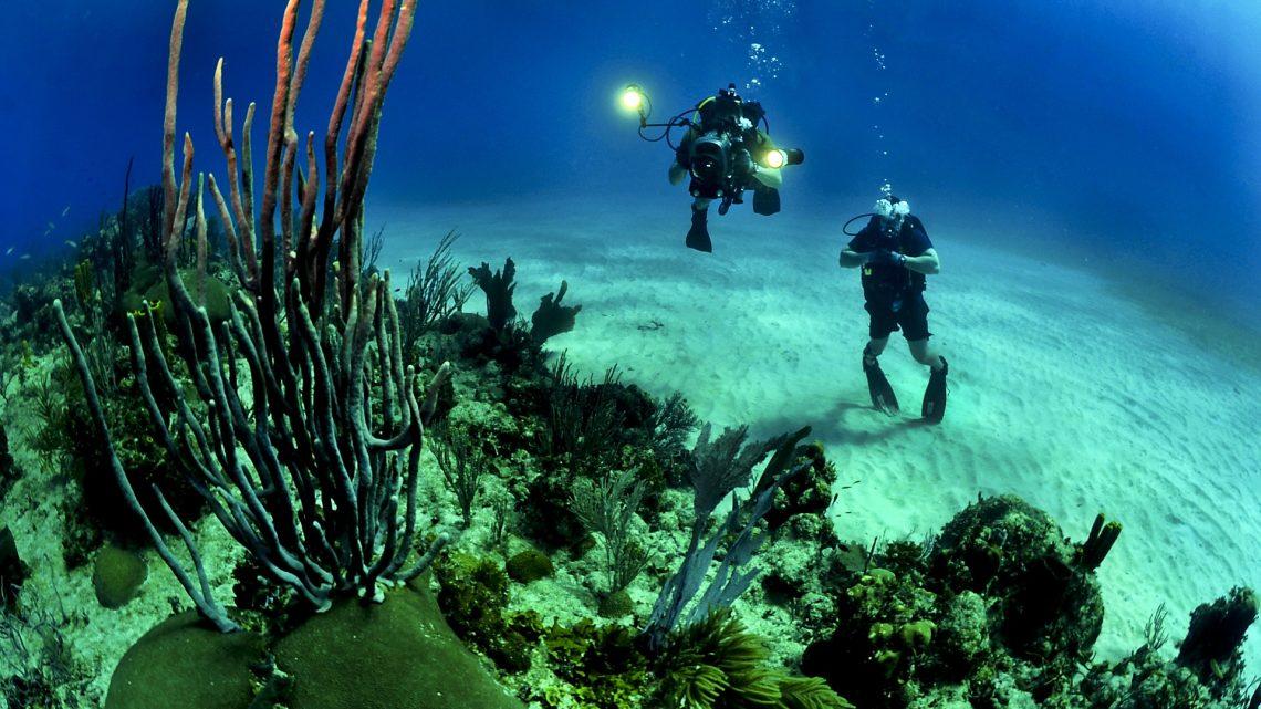 Explorer l'océan Pacifique à l'occasion d'une croisière en Polynésie française