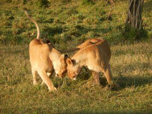 Kenya visite parc tsavo