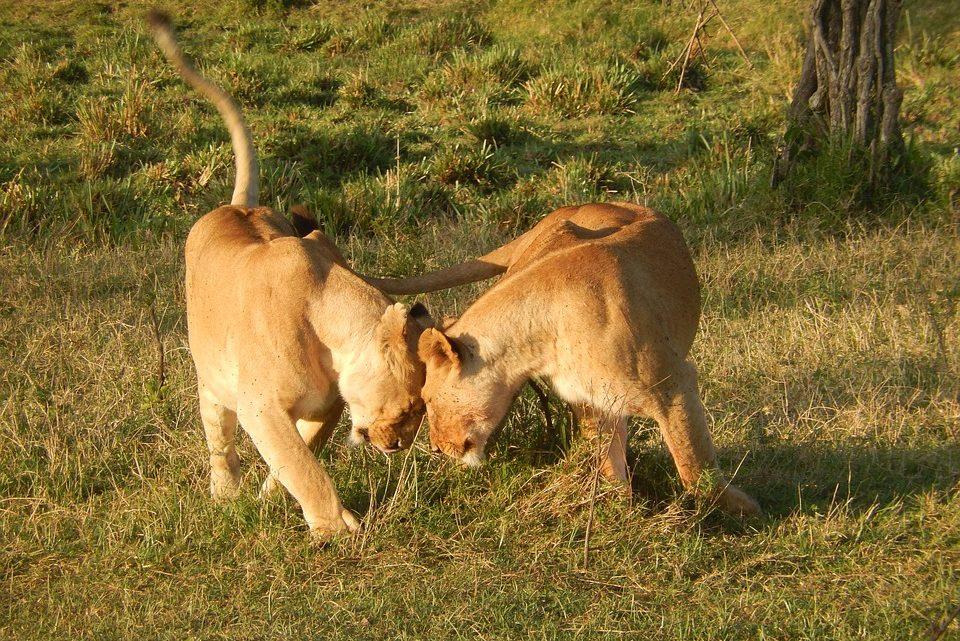Partir à l'exploration du parc national de Tsavo au Kenya